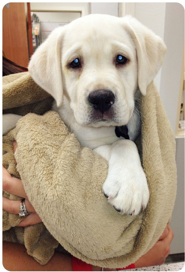 24 cachorros que odeiam veterinários tanto quanto você odeia dentista