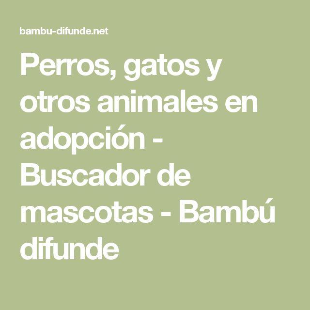 Perros, gatos y otros animales en adopción - Buscador de mascotas  - Bambú difunde