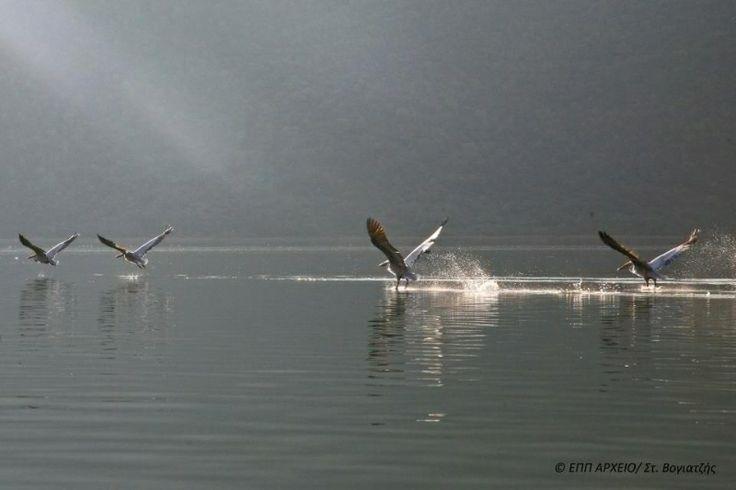 Prespa Lakes birds