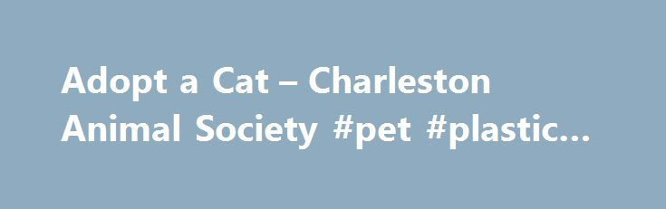 Adopt a Cat – Charleston Animal Society #pet #plastic #uses http://pet.remmont.com/adopt-a-cat-charleston-animal-society-pet-plastic-uses/  Adopt a Cat Adopt a Cat Free Adoptions November 25th 28th Thanks to Zappos and Best Friends Animal Rescue Charleston Animal Society is offering FREE adoptions starting on Black Friday and running through Cyber Monday. We re offering adoptions at six location:Charleston Animal Society: North Charleston (Saturday Monday)PetSmart: North Charleston, West…