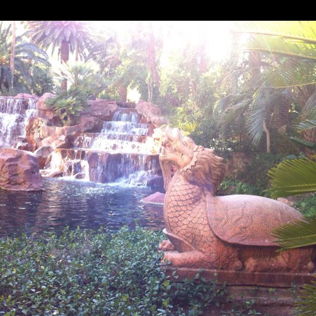 Las Vegas - Secret Garden at The Mirage: Lass Vegass, Las Vegas, Secret Gardens, Vegas Baby, Hotel Resort Las, Viva Lass, Vegas Birthday