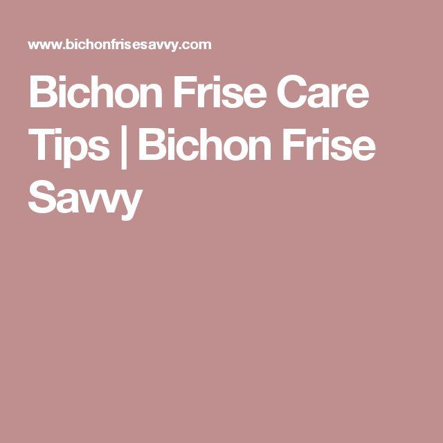 Bichon Frise Care Tips | Bichon Frise Savvy