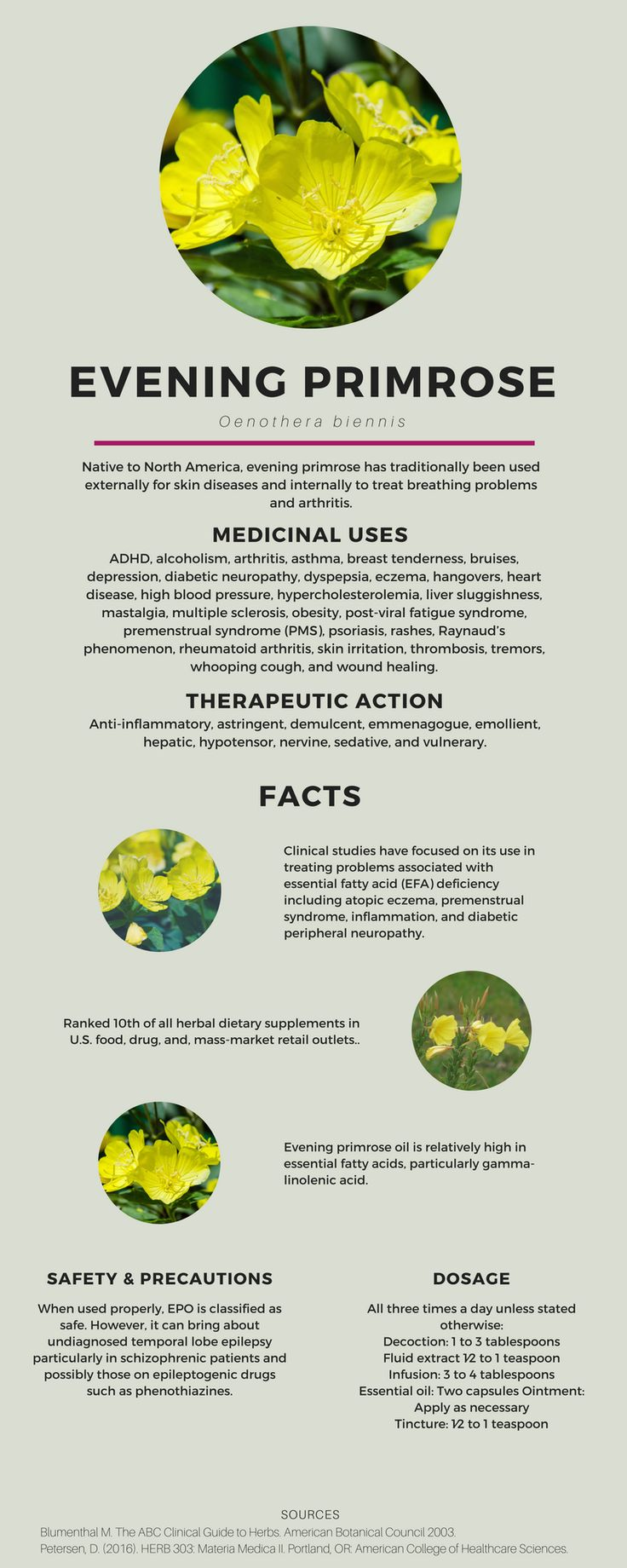 Evening primrose benefits and uses