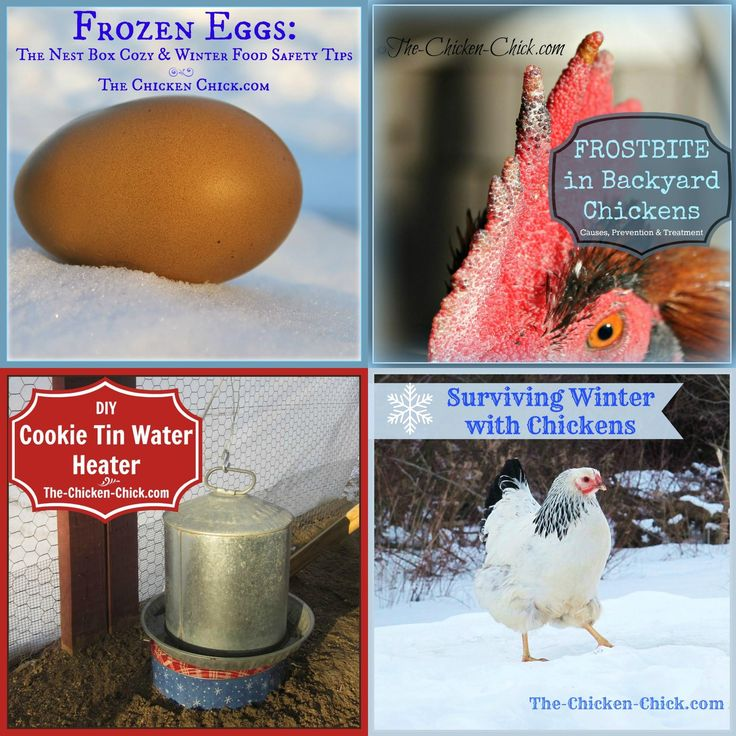 84 Best Homesteading Images On Pinterest
