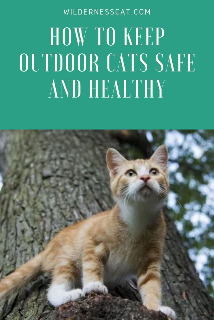 How To Keep Your Outdoor Cats Safe And Healthy Outdoor Cats Cat Safe Cat Safety