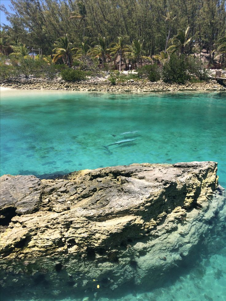 Dolphins at Blue Lagoon Island, Bahamas