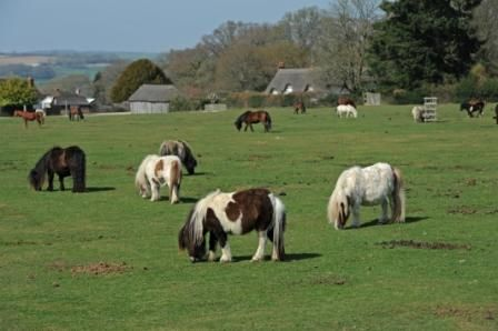 Ponies at Woodgreen