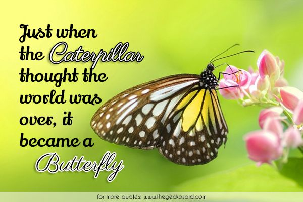 Just when the caterpillar thought the world was over, it became a butterfly.  #became #butterfly #caterpillar #over #quotes #thought #world  ©2016 The Gecko Said – Beautiful Quotes