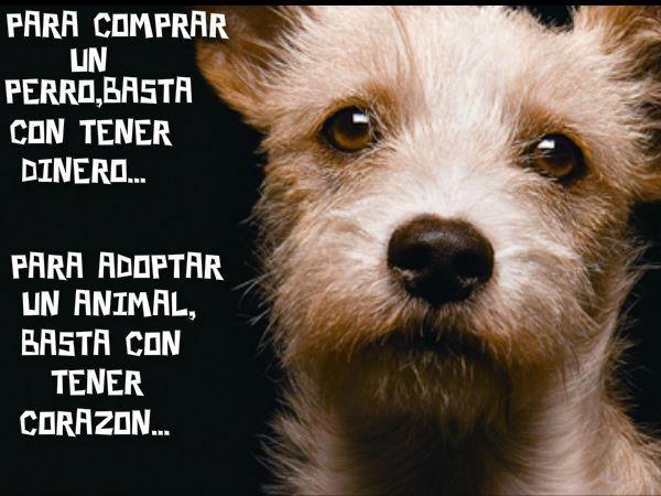 Para comprar un perro, basta con tener dinero. Para adoptar un perro, basta con tener corazón.    Adopta, no compres!