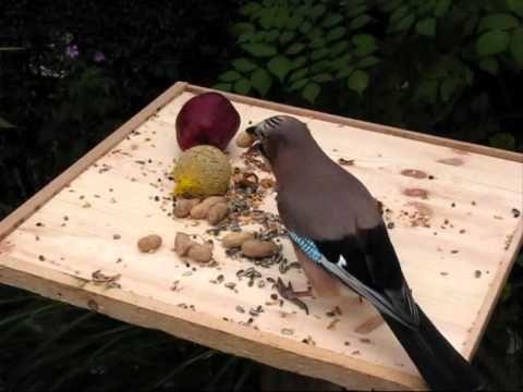 ▶ Natuur in eigen land, vogels in de winter van 2008-2009 - YouTube