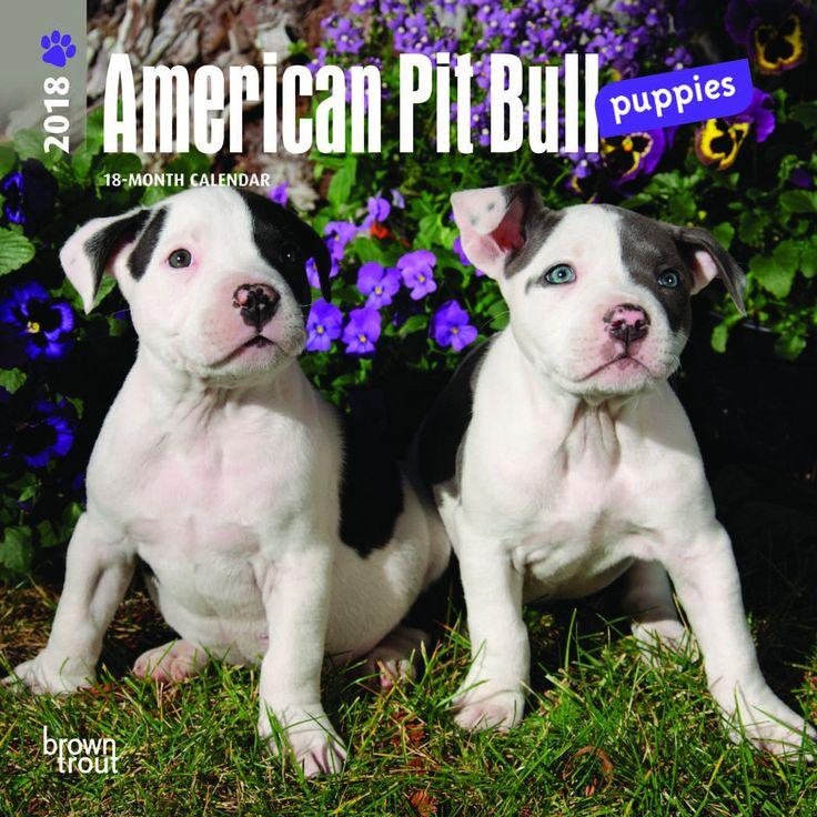 Best 25 Pit Bull Mix Ideas On Pinterest Pitbull Mix
