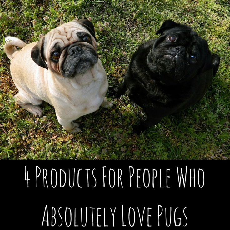 4 products for people who absolutely love pugs.  New blog - First post by James Crowe