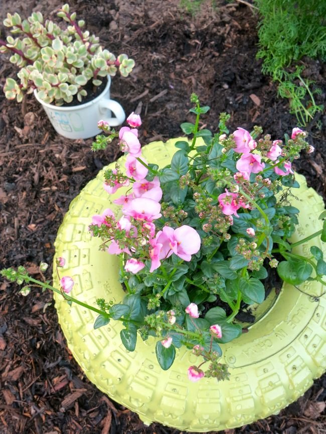 one of my freshly painted tire planters.