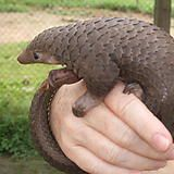 Just looked for Pangolin images...New favorite animal. http://ift.tt/2lIMuAU