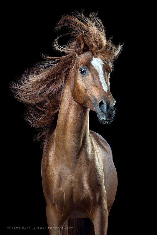 "Neue Fotoserie ""Horsestyle"" | Wiebke Haas · Animal Photography"