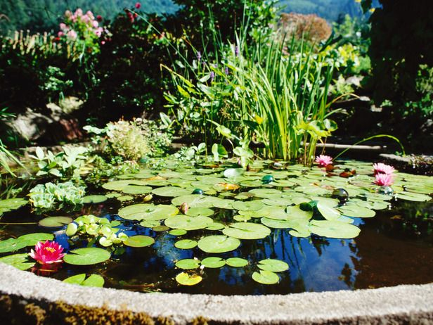234 best along the garden path images on pinterest for Beneficial pond plants