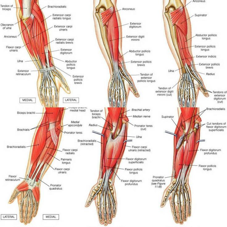 An easy way to learn upper limb muscles | anat | Pinterest
