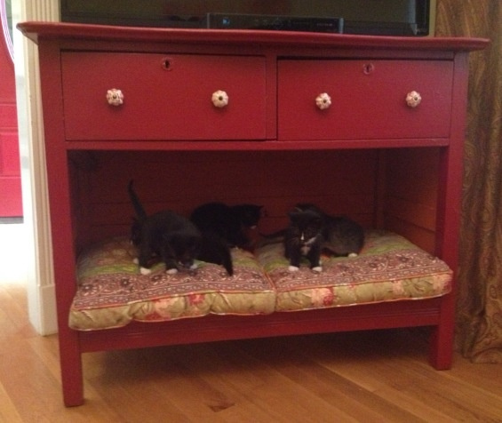 Diy Pet Bed A Vintage Dresser Becomes A Perfect Pet Bed