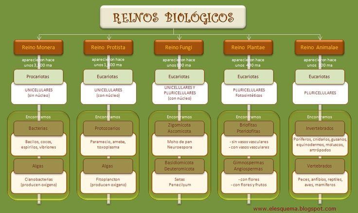 esquema-reinos-biologicos.jpeg (865×515)