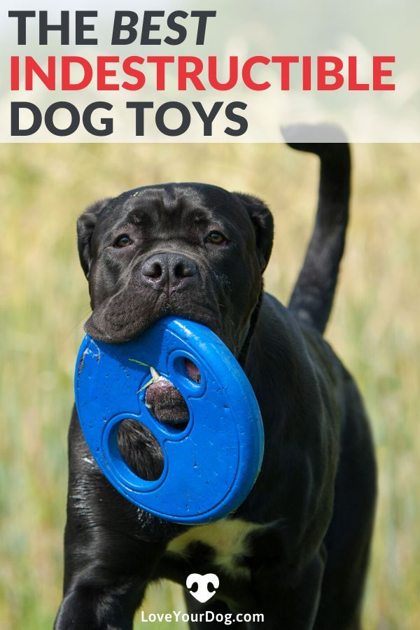 Best Indestructible Dog Toys For Aggressive Chewers 2020 Reviews