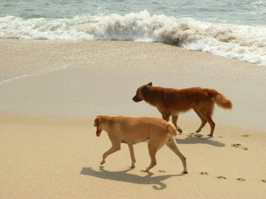 Partners in crime. #dogs #beach #summer Mozambique Africa.