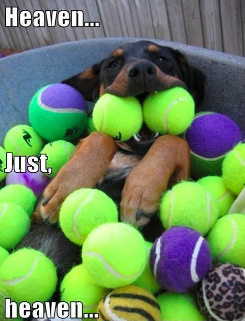 ha: Dream Come True, Pet, Happy Puppys, Ball Pits, Daisies, Dogs Heavens, Happy Dogs, Tennis Ball, Animal