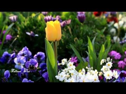 André Rieu - Nightingale Serenade (Toselli Serenade) - YouTube