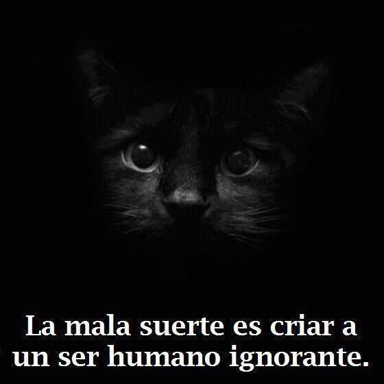Gato  negro....