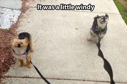 Funny Pic Dump (9.25.13) | Pleated-Jeans.com