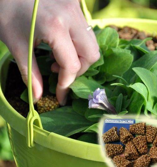 фото декоративное растение Удобрение Osmocote Exact Tablets