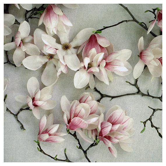 Photography - Flower Photograph - Spring Photography - Blossom - Flower - Sonnet - Fine Art Photograph - Spring Magnolia Tree - Nature Art