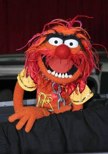 surrrrrprrrrize!!!  animal muppet drummer guy                                                                                                                                                                                 More