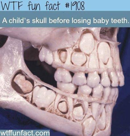 Teething toddlers!