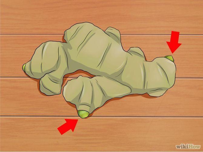 Comment faire pousser du gingembre