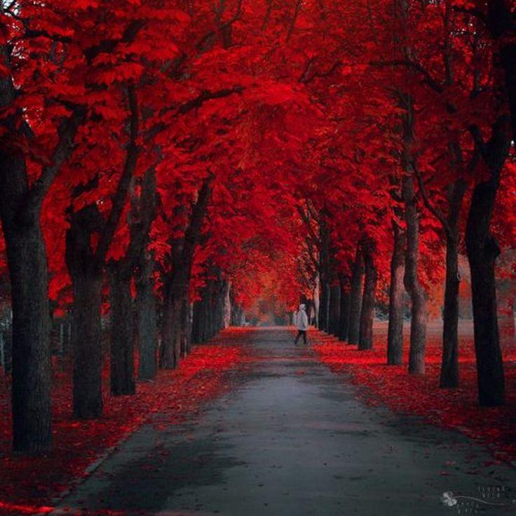 необычные картинки аллея красные деревья вмагазин мне