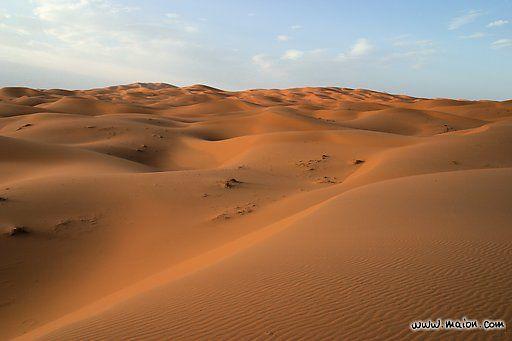 Tienen reputación de tener poca vida, pero eso depende de la clase de desierto; en muchos existe vida abundante, la vegetación se adapta a la poca humedad y la fauna usualmente se esconde durante el día para preservar humedad, lo que significa que un ecosistema desértico es árido, su mayor característica.
