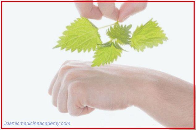 Beneficial Herbs to Treat Arthritis Symptoms