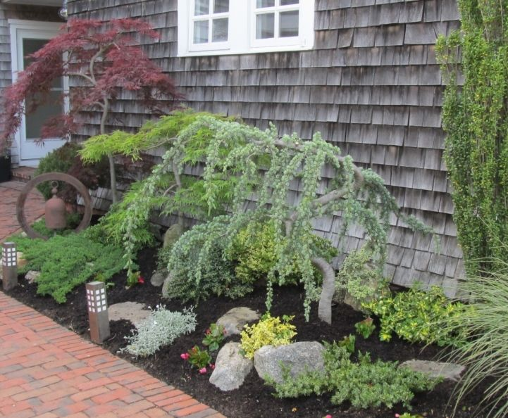 How close is too close? Planting ornamental trees near a foundation. - Land8  two Japanese Maples and a Weeping Blue Atlas Cedar