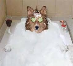 Resultado de imagen para perros bañandose spa