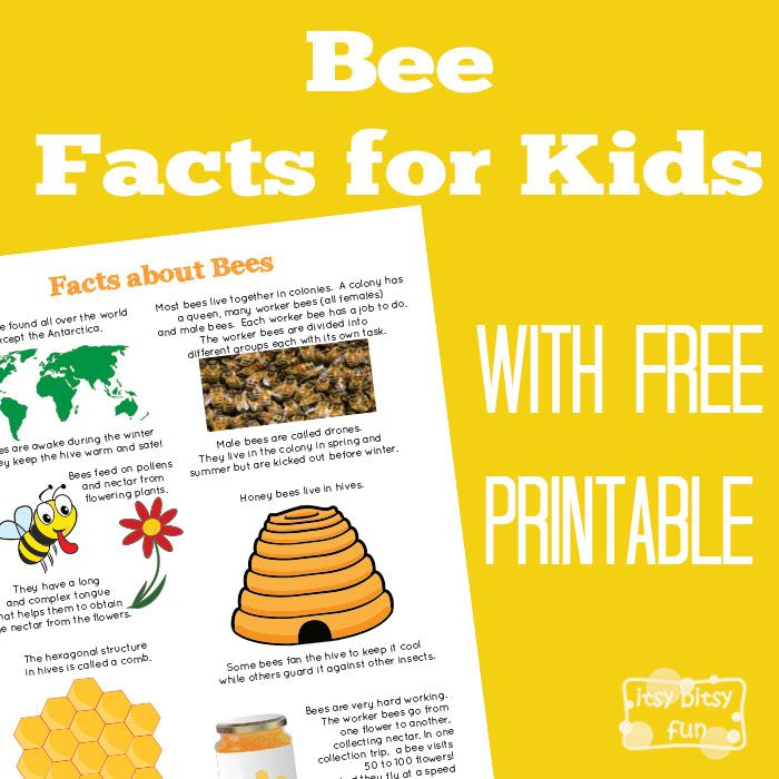 Bee Facts for Kids                                                                                                                                                      More