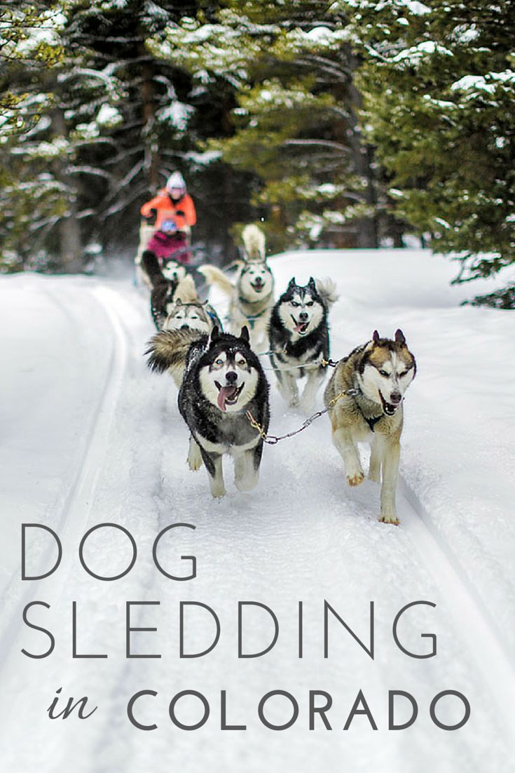 Dog Sledding in Breckenridge, Colorado at Good Times Adventures