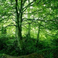 Selva de Irati (Navarra): el mayor bosque de hayedos de España