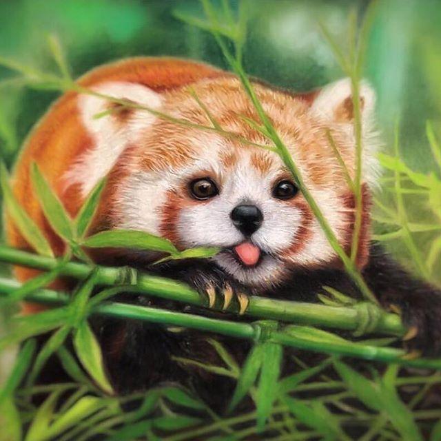 Red Panda Rare Red Panda Cute Red Panda Baby Cute Kawaii Animals