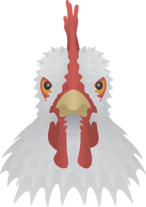 닭 벡터 이미지입니다.   chicken vector image