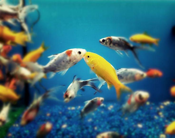 Las 25 mejores ideas sobre acuario de agua salada en for Los mejores peces de agua fria