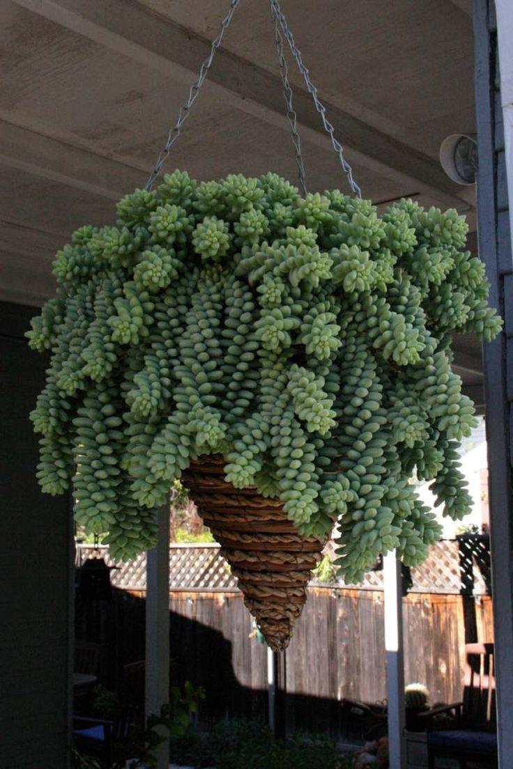 pot suspendu en forme de cône avec plantes succulentes