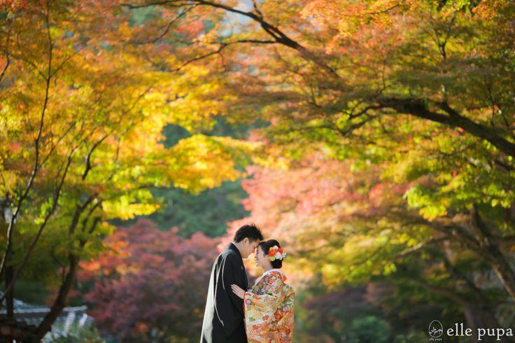 秋のグラデーション*日吉大社ロケーション撮影   *elle pupa blog*
