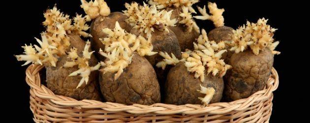 Patateslerin filizlenmesini önlemek için patates torbasının içine birkaç adet yeşil elma atın.