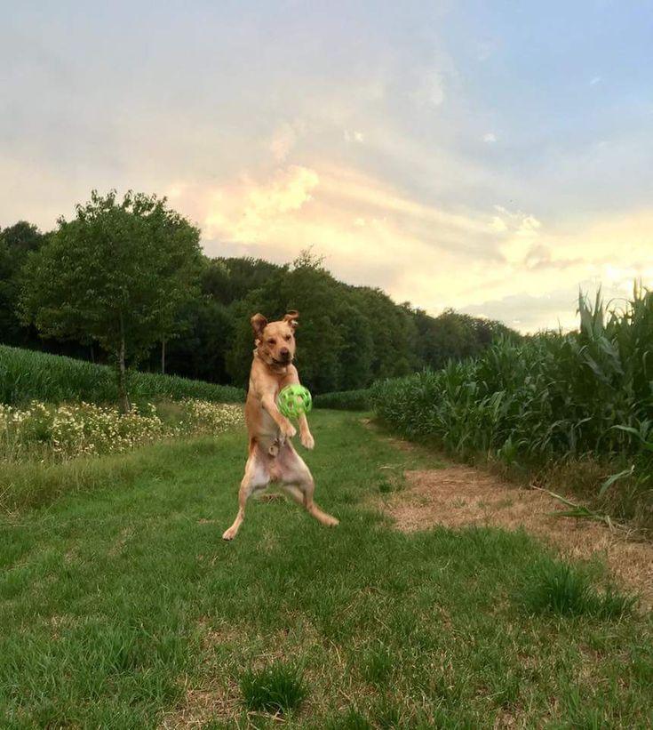 Hunde Foto: Hermine und Khaya - Freudensprung Hier Dein Bild hochladen: http://ichliebehunde.com/hund-des-tages  #hund #hunde #hundebild #hundebilder #dog #dogs #dogfun  #dogpic #dogpictures