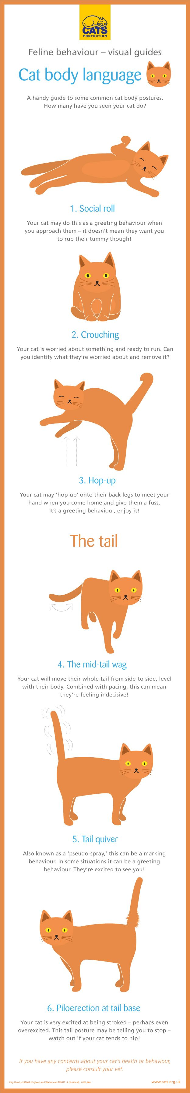 Feline behaviour explained – cat body language. How many of these have you seen your cat do?